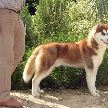 Cachorro de 9 meses